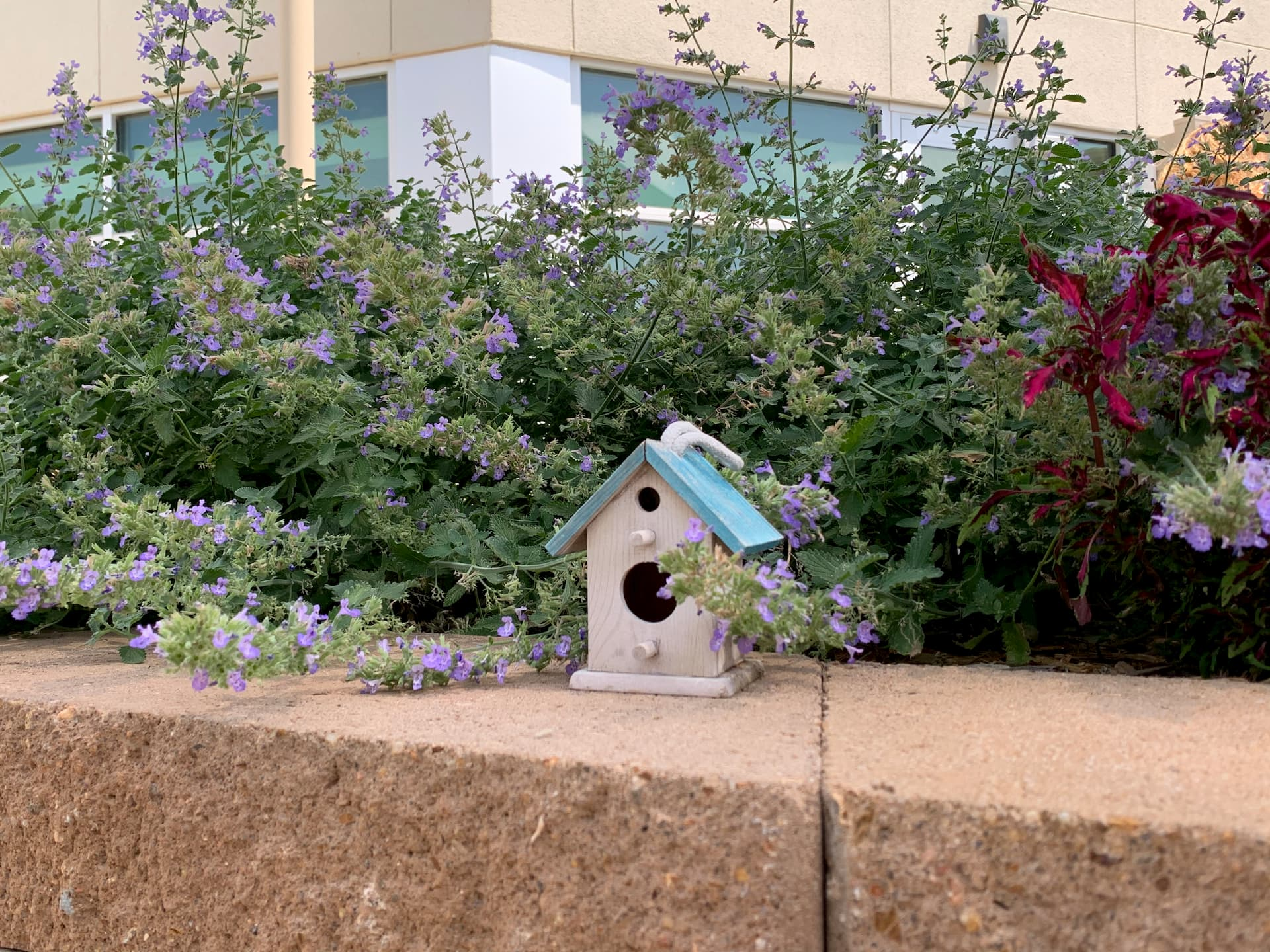 birdhouse decor in Barrick and Kristi Wilson Terrace at newton medical center newton ks