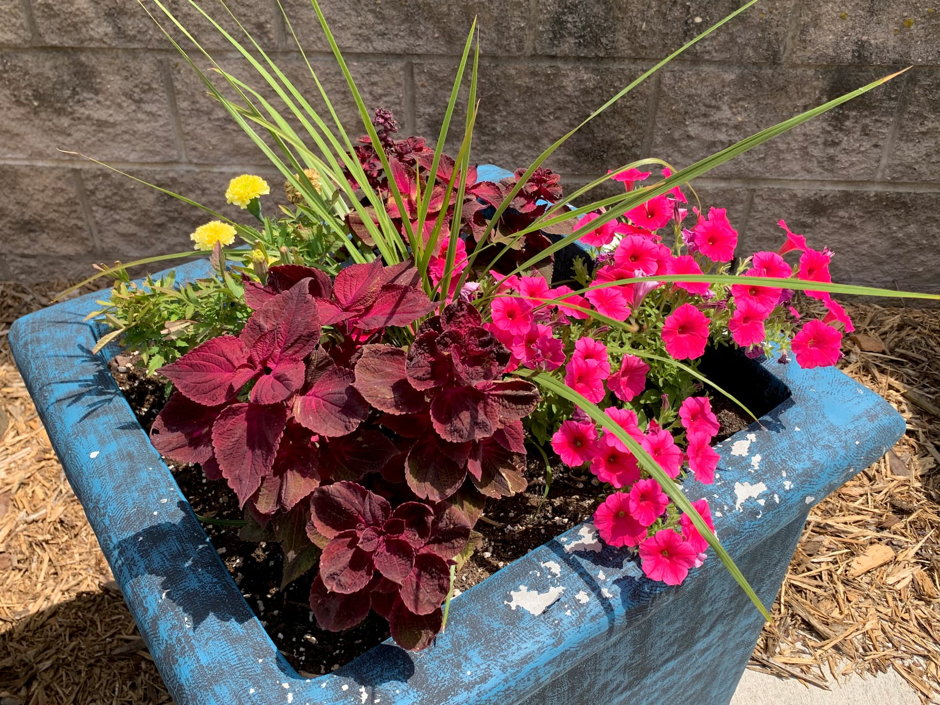 planter with red, pink and yellow flowers in Barrick and Kristi Wilson Terrace at newton medical center newton ks