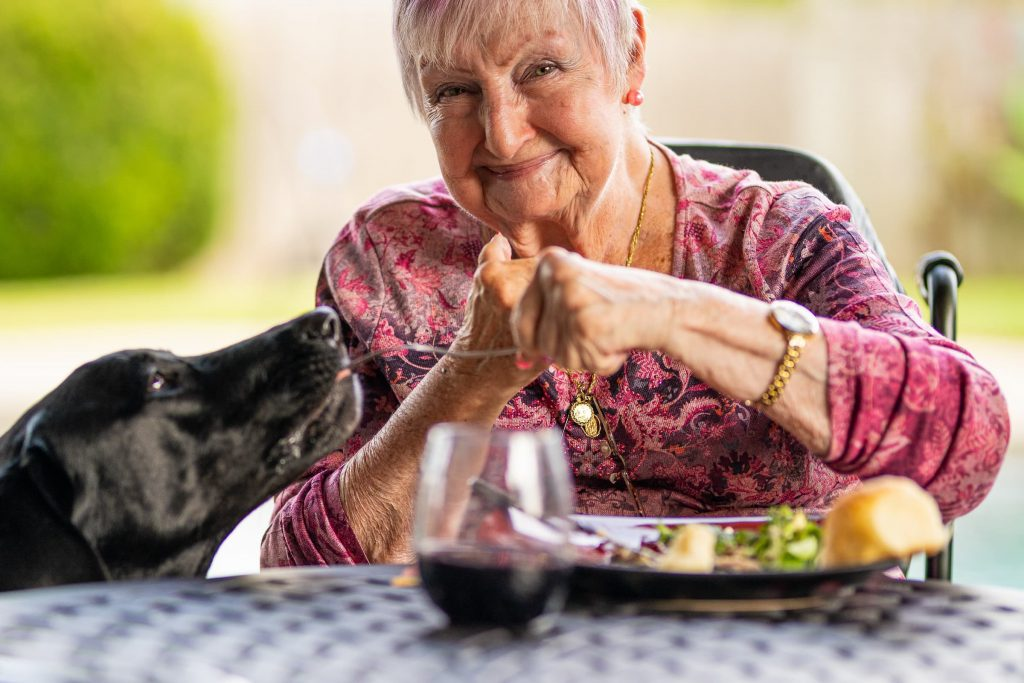 senior woman sitting at table with plate of food feeding black laborador retriever with fork senior and dog heart healthy gifts live longer with dog