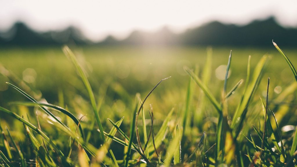 Closeup of grass with hot sun beating down in background