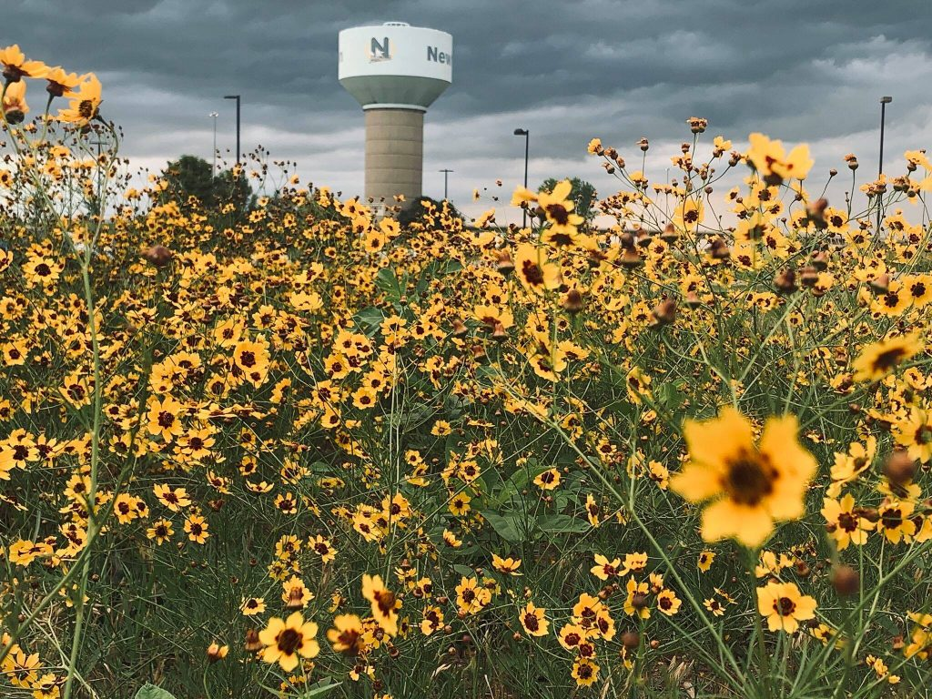 Beautiful yellow wildflowers black eyed susans in front of Newton KS water tower at NMC Health Medical Center in Newton Ks photo credit Melisha Oakleaf-Wilson